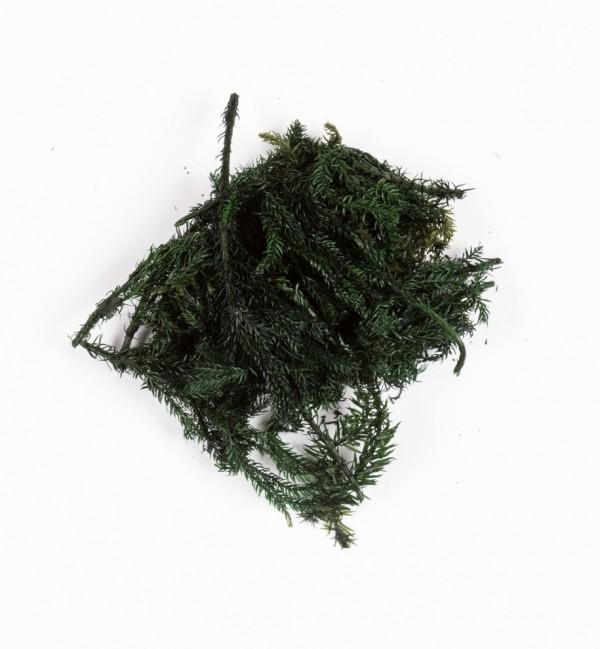 Sacchetto con cespugli verdi n.1220 (10 gr.)