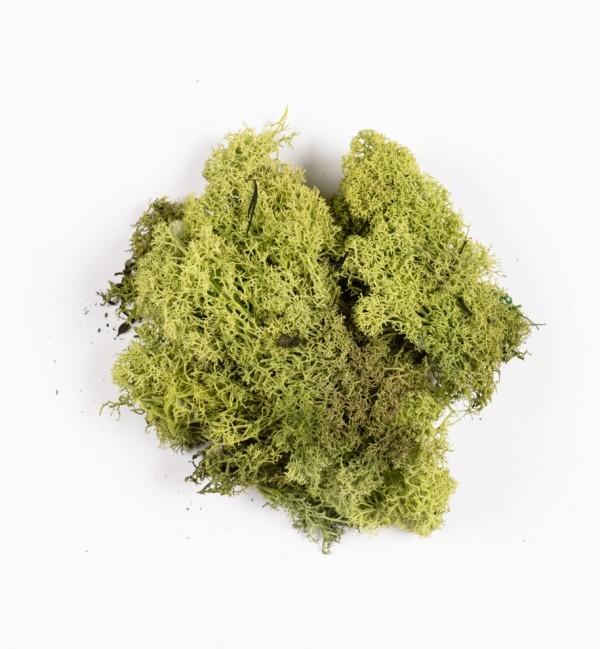 Sacchetto con lichene verde n.1254 (30 gr.)